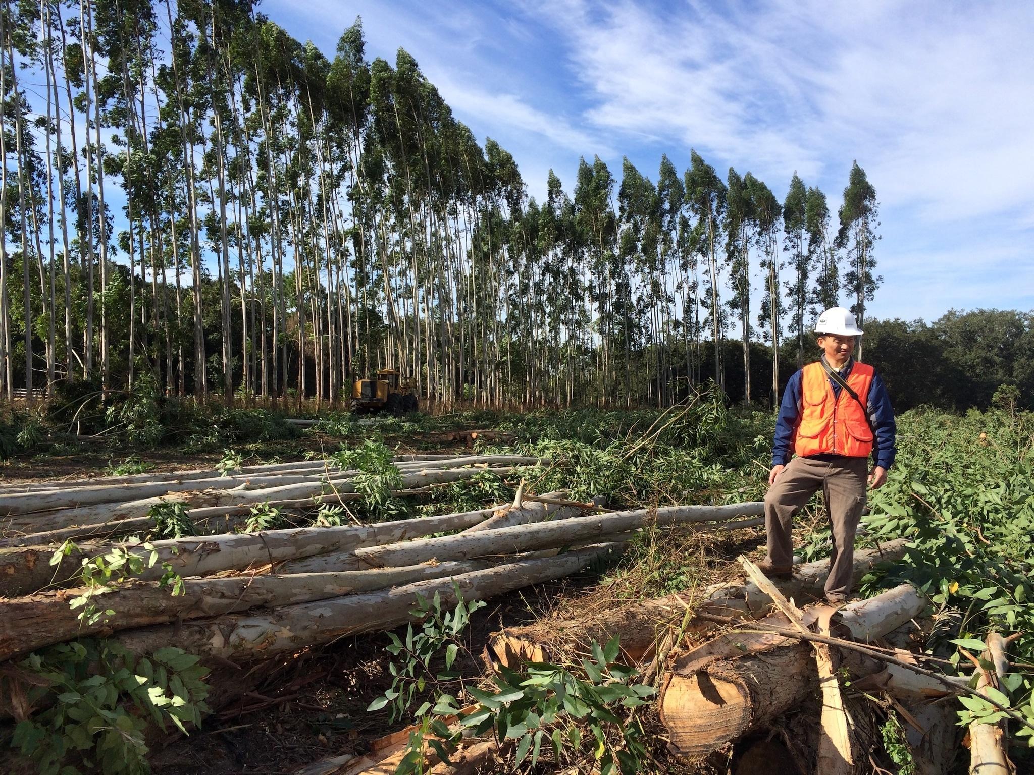 Harvesting trees 6