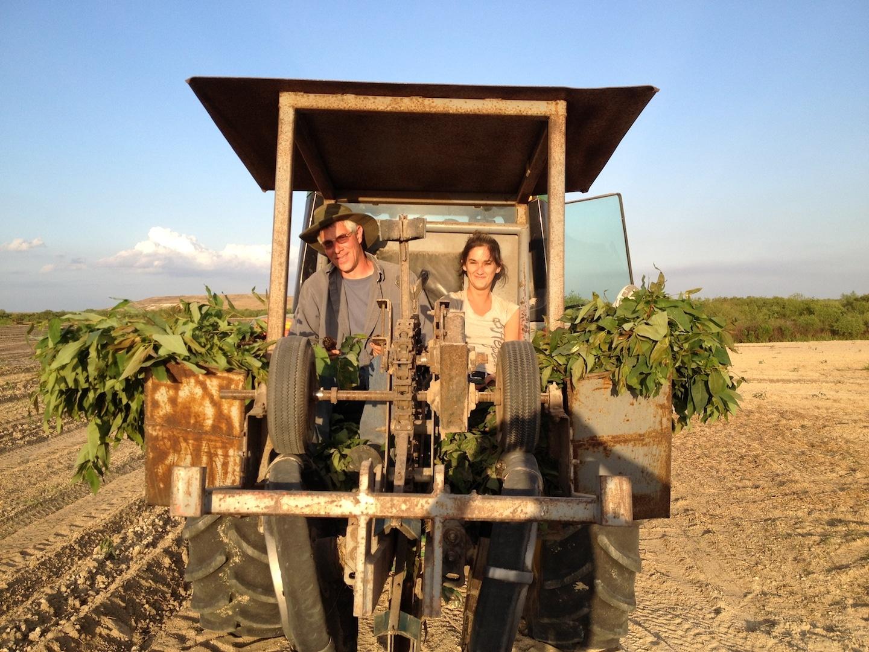 Planting Eucalyptus