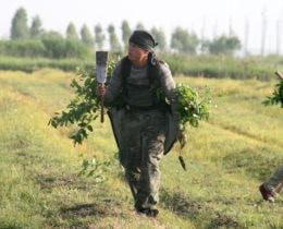 Planting trees 4