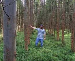 Tom with Eucalyptus trees 3